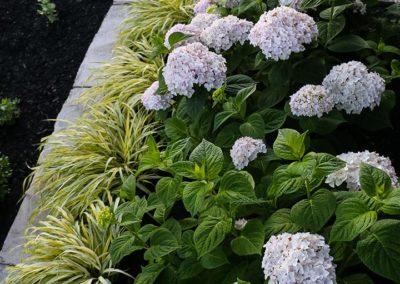 Structured Garden - Flowers